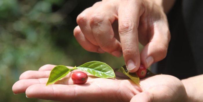 imagen El Triángulo del Café (Colombia)…
