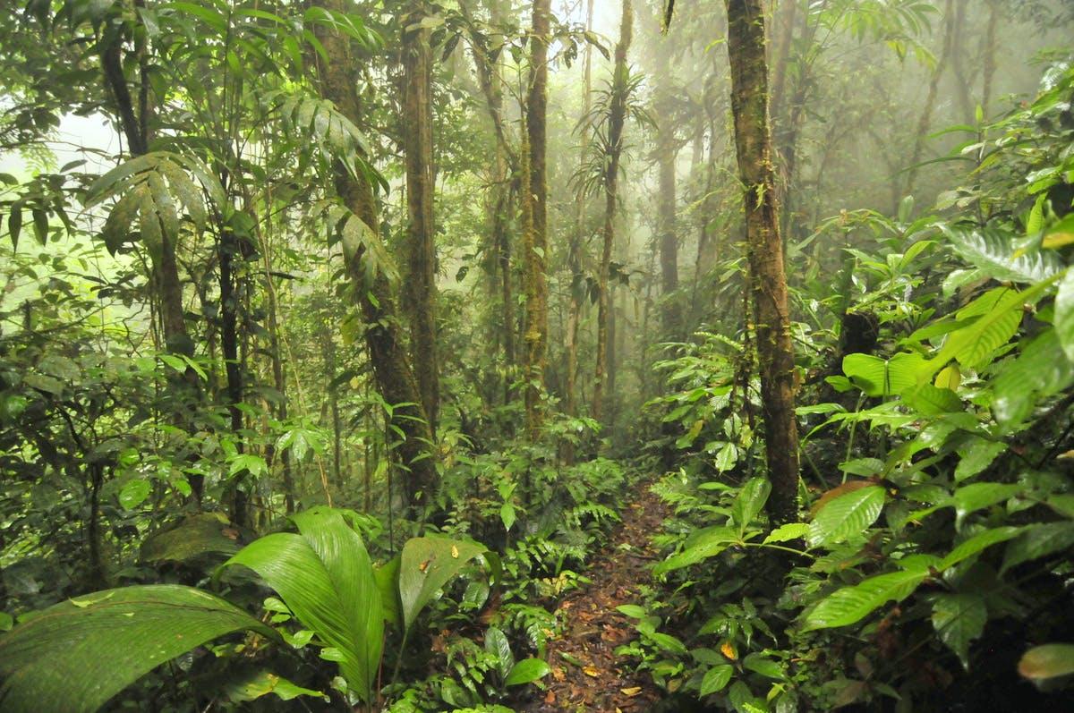 Parque Nacional Omar Torrijos