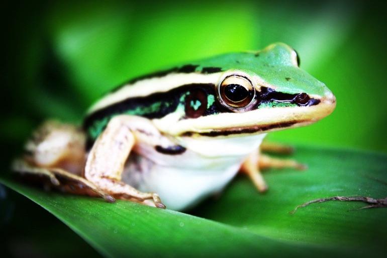Fauna del Bosque Protector y Paisaje Protegido de San Lorenzo