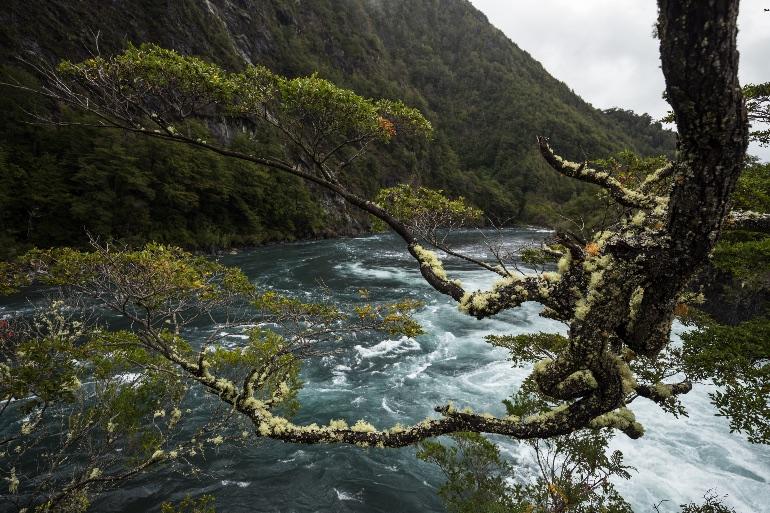 Parque Nacional Vicente Rosales