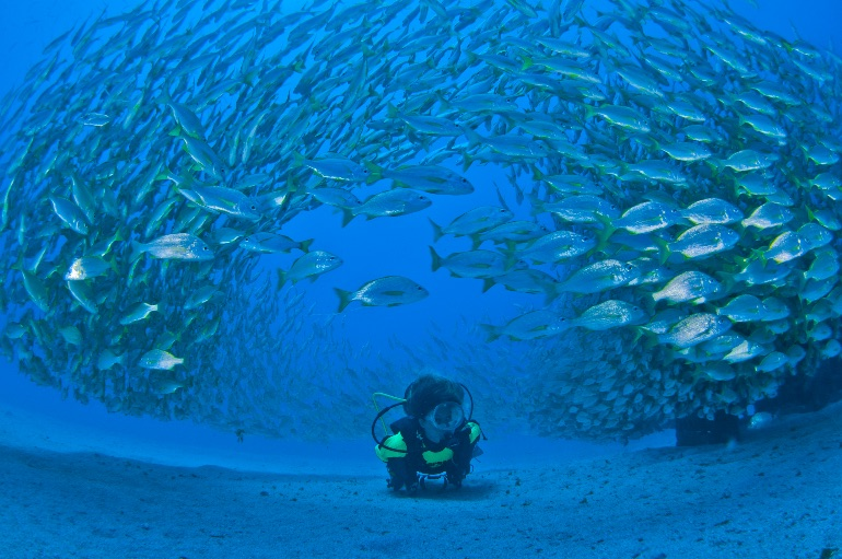 Fondo marino en Gran Canaria © Turismo Gran Canaria