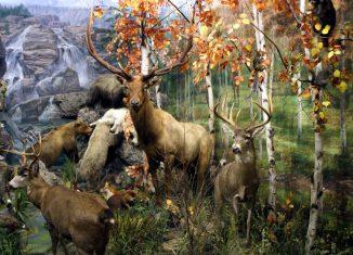 imagen Cinco museos de León para…