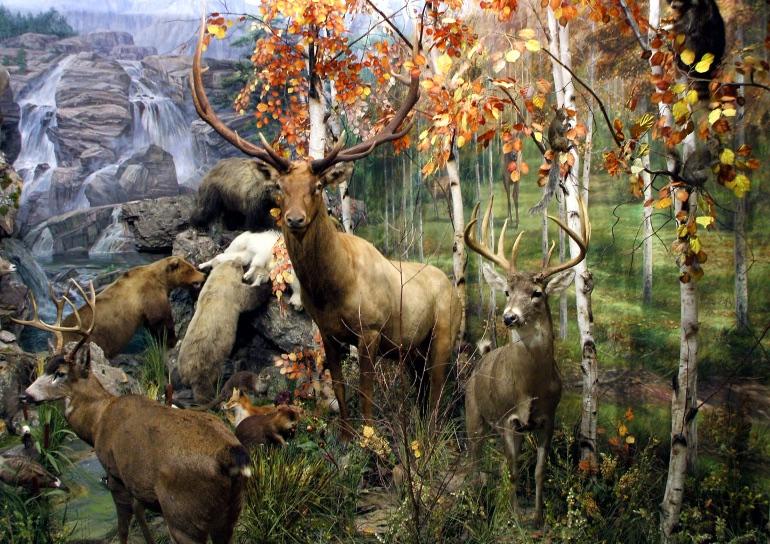 Museo de la Fauna Salvaje de Valdehuesa