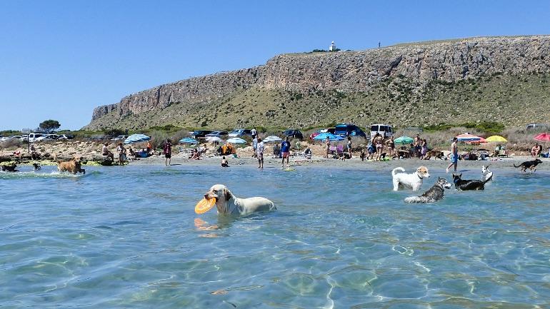 Los perros son bienvenidos en la Caleta dels Gossets de Santa Pola