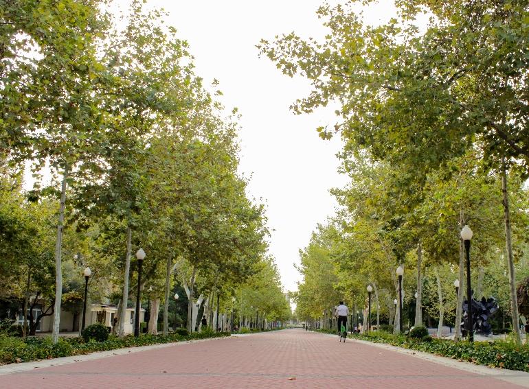 Las arboledas del Parque de Ribalta son extraordinarias