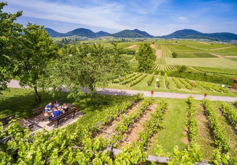 Ruta alemana de los vinos