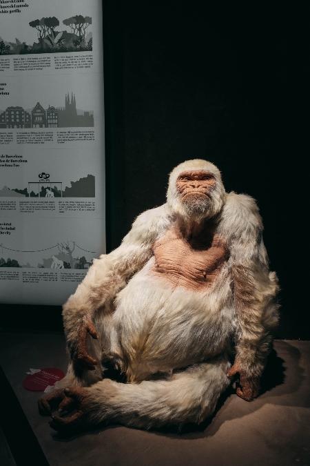 El querido gorila albino del zoo de Barcelona se ha hecho un hueco en nuevo Museo de Cera