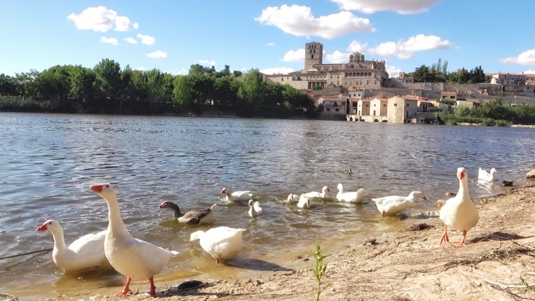 Vistas de Zamora desde la playa de los Pelambres