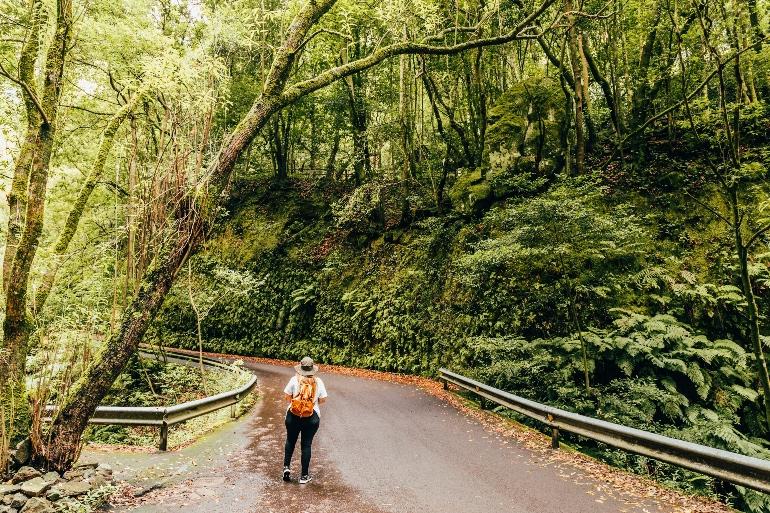 Paisaje de Los Tilos, en La Palma