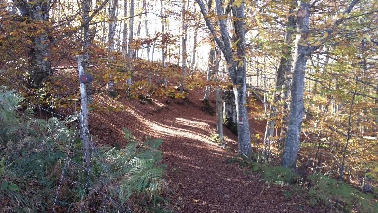 Los caminos de Dante atraviesan bosques maravillosos como éste de los alrededores de Brisighella © Associazione Camino di Dante