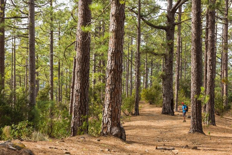 Parque de la Corona Foresta © Ayuntamiento de La Orotava