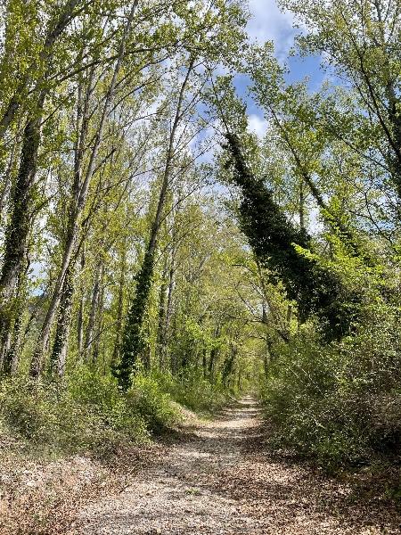 En este bosque de las fueras de Olba hice un shinrin-yoku