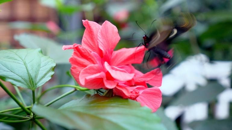 Jardín de mariposas del castillo de Sayn