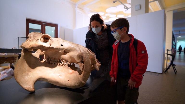 Museo de Historia Natural de Berlín